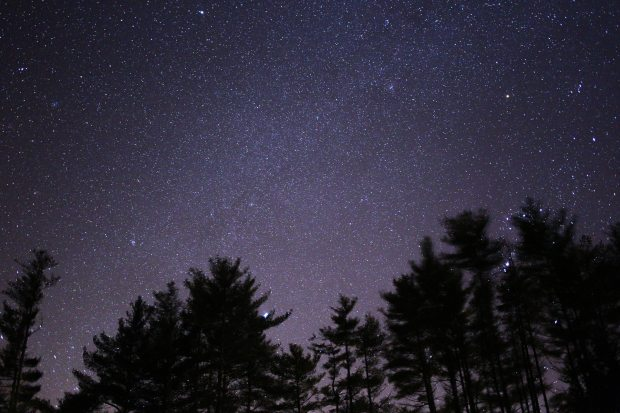 nature-stars-sky-trees-90740
